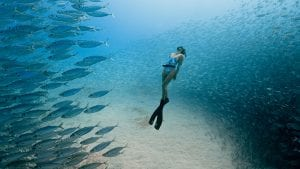 Ocean Ff Promo Image Photo By Travis Burke, Freediver Chelsea Yamasee Hres Web 900 X 506